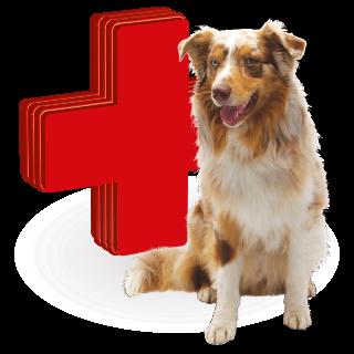 Obrazek dla kategorii vitamíny a léčiva pro psy