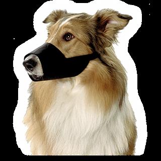 Obrazek dla kategorii nylonové náhubky pro psy