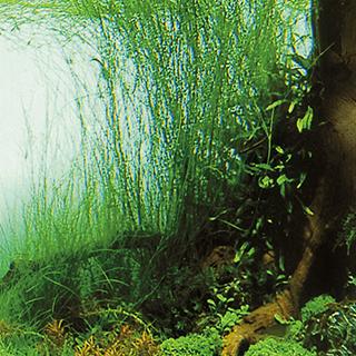 Obrazek dla kategorii Trixie akvarijní tapety