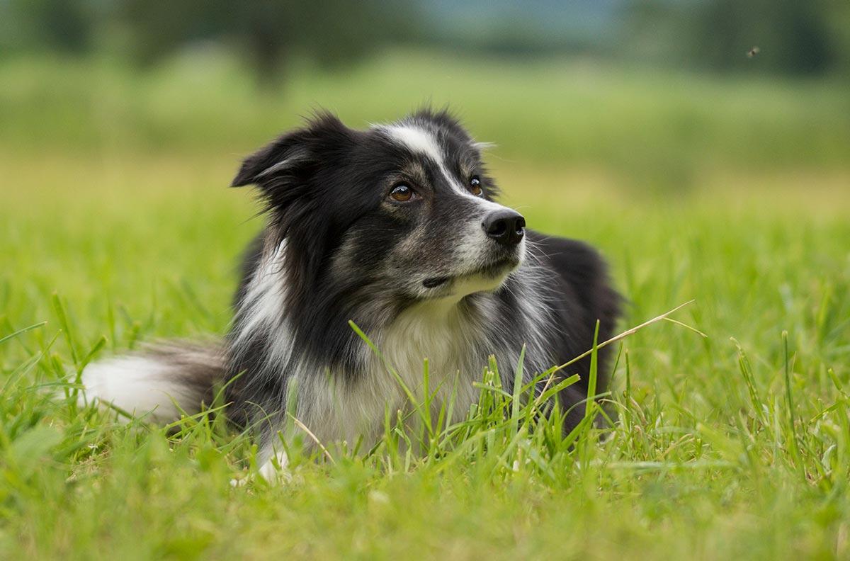 Obrazek dla kategorii Psi