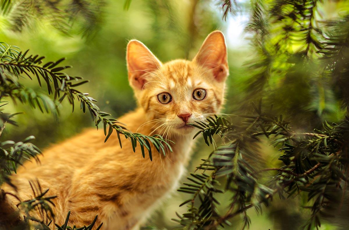 Obrazek dla kategorii Kočky